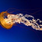 Jellyfish Adventures 2